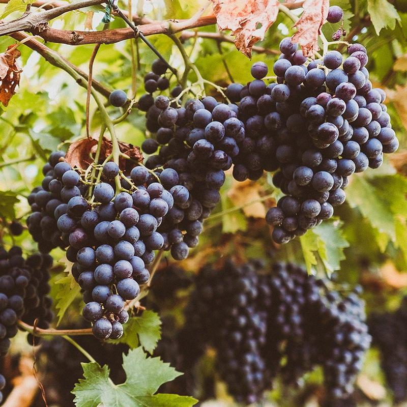 Accordini Igino Winery: sigla per riconoscere il vino | Guida 2020