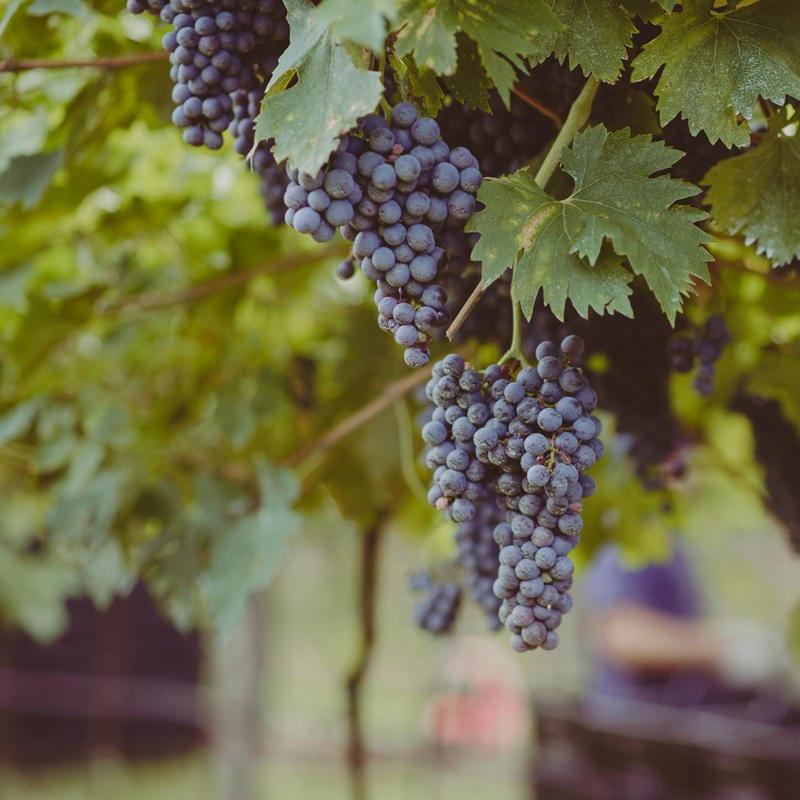 Ein Wein, tausend Ausdrücke